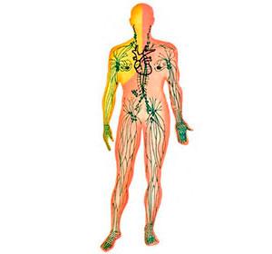 Lymphsystems, lymphome, Hodgkin