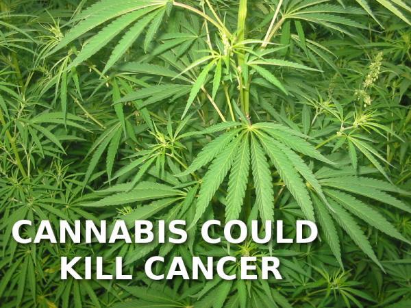cannabis-und-krebs